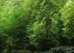 Aquatic plantsdownload.jpg
