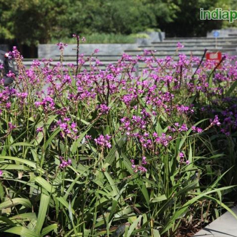 Ground orchidimg1896_33599664.jpg