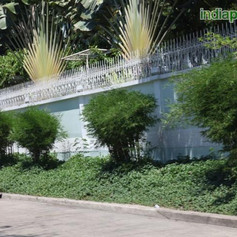 Bambusa multiplex pencil bamboo fer leaf