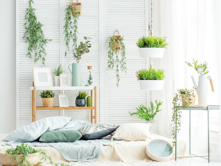 5 Reasons to have Indoor plants In your interiors