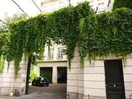 images.jpegInterior Leaf Vertical Garden Ideas