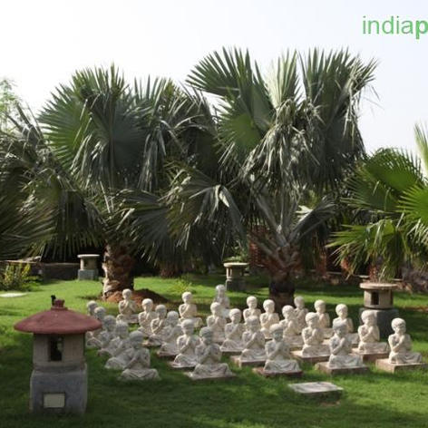 Blue Latan Palm.jpg