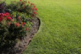 Interior Leaf Grass Lawn Ideas