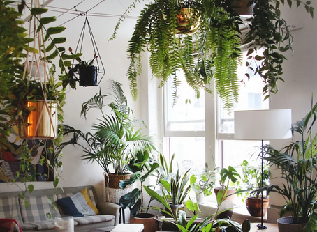 How plants affects your life in positive way