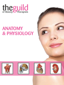 Anatomy & Physiology - Online Course Beauty Guild Accredited