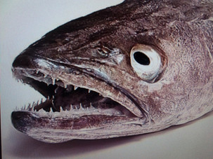 Sobrepesca: Spain's annual fish supply already gone