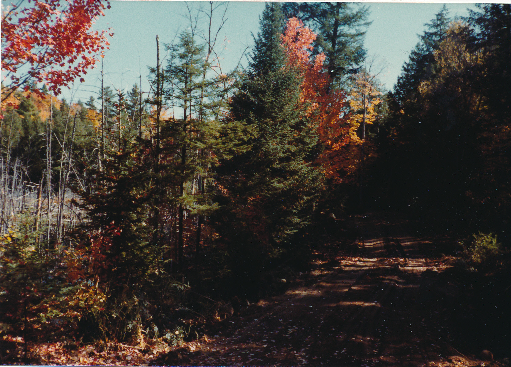 1981-10-31 Gold Lake Road with the beaver pond on the left