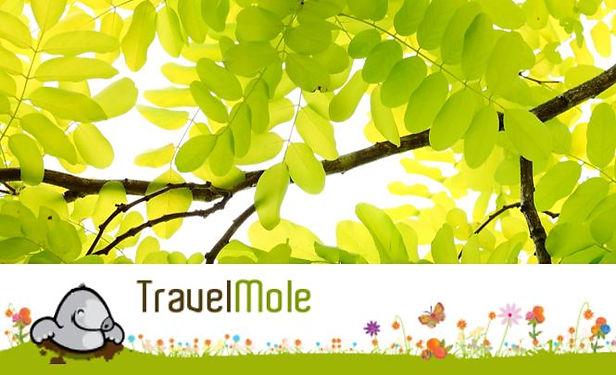 TravelMole.JPG