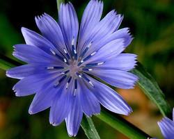 Elena Trezza - fiori di Bach