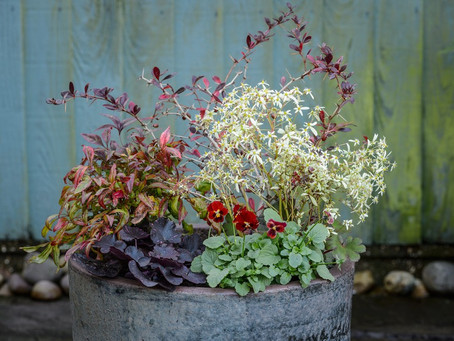 Winter Flowering Plants for Containers