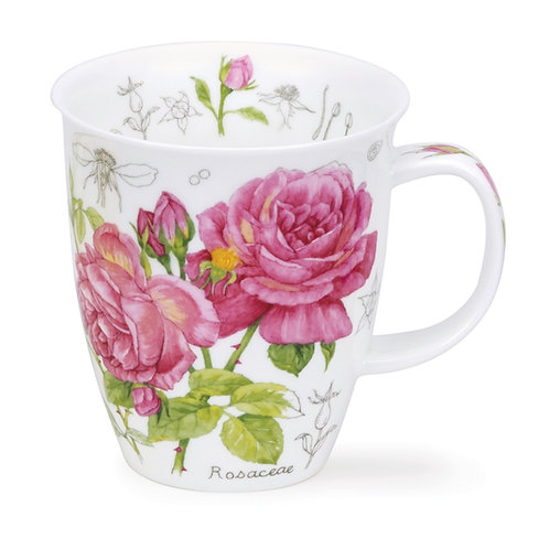 Nevis Floral Sketch - Rose - Dunoon fine English bone china