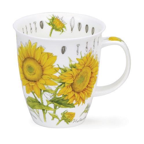 Nevis Floral Sketch - Sunflower - Dunoon fine English bone china