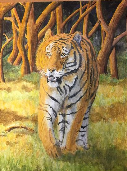 Tiger%202020_edited.jpg