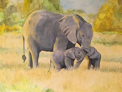 Elephants 202.JPG