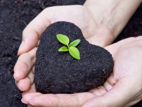 Foco no Meio Ambiente! Programa Agricultura de Baixo Carbono crescem quase 98% de julho a setembro