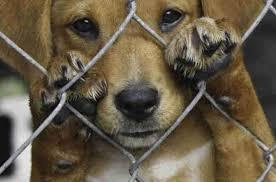 FOCO NA RESPONSABILIDADE SOCIAL! Condomínios deverão comunicar maus-tratos a animais.