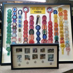 Competition  Rosettes