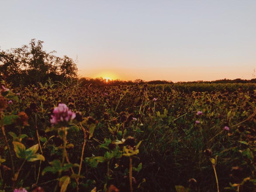 Zugibe at Sunset