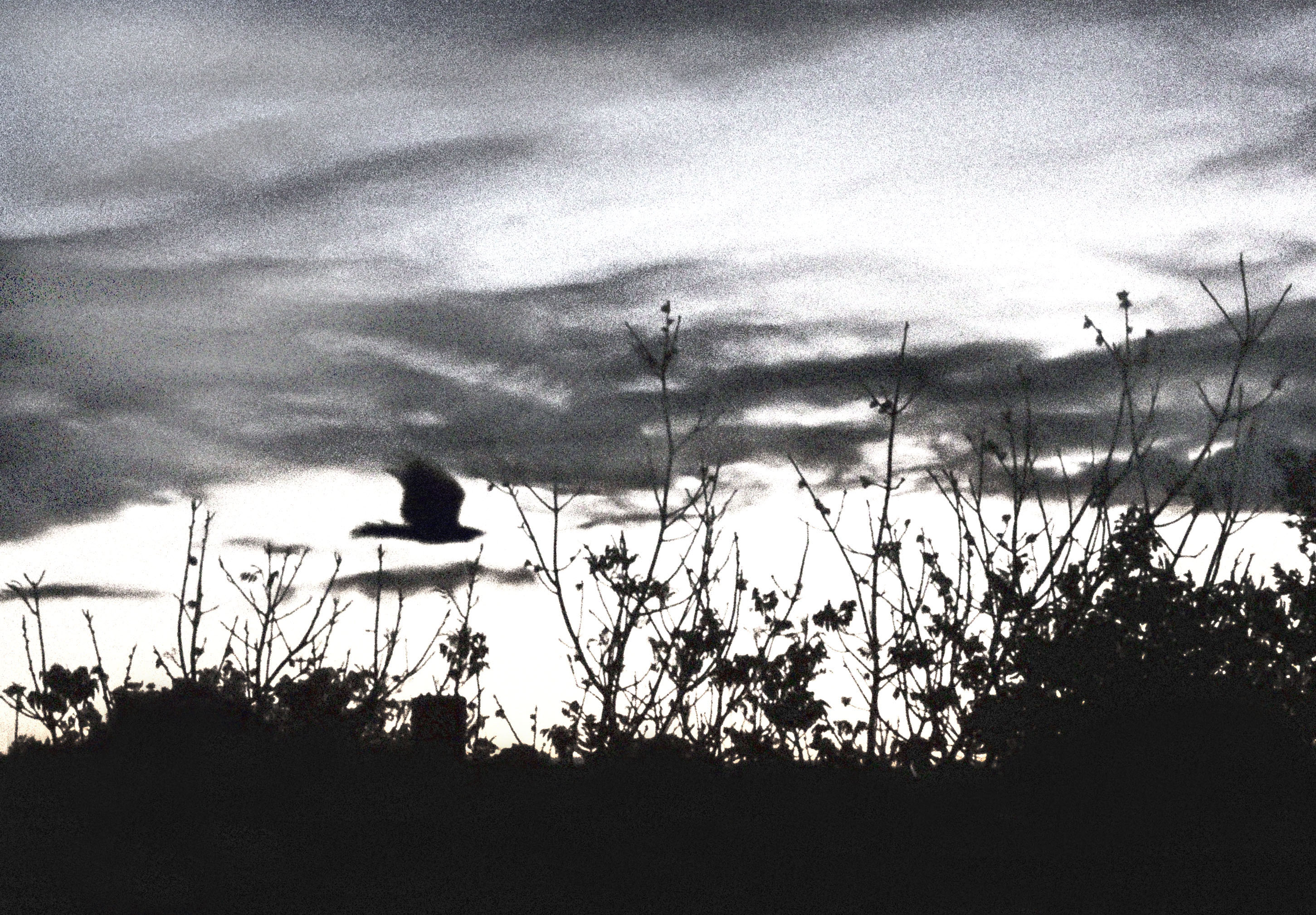 Miniatures-Aves in Flight
