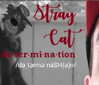 Stray Cat (#determination)