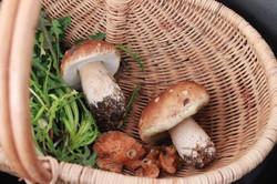 Cueillette de champignons !