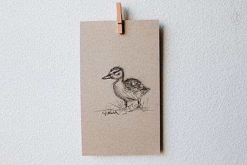 Duckling 03