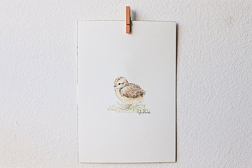Baby Chick 01