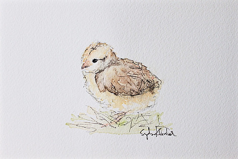 Baby Chick 01