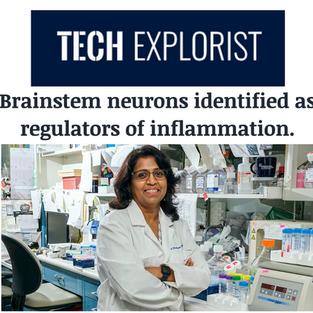 Brain Neurons Regulate Inflammation