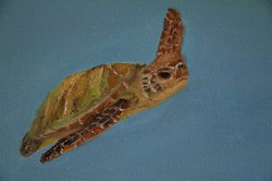 Részlet: teknőc
