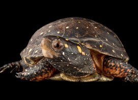 All About Frogs and Turtles