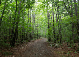 Protecting Our Forests Against Invasive Species