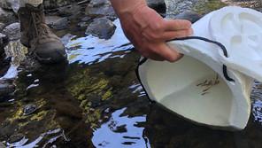 The Atlantic Salmon Release