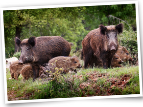 Positionspapier Schweizerischer Tierschutz STS