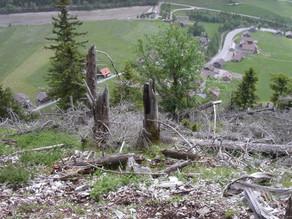 Massnahmenpaket zur Verbesserung der Waldverjüngung