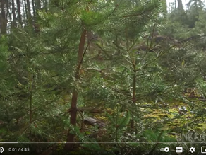 Wald vor Wild: Wie steht es um das Gleichgewicht?