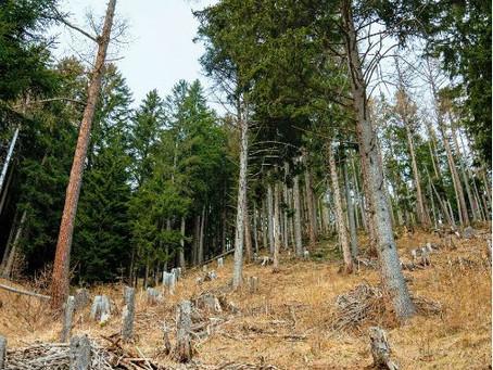 Wald gegen Wild