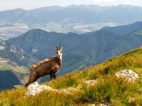 Bericht über die bleifrei Munition in Graubünden