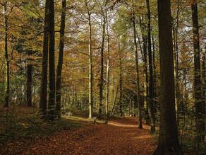 Liechtensteiner Wald soll «klimafit» werden