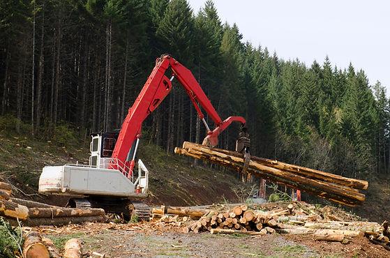 Gravemaskin flytting logger i skogen