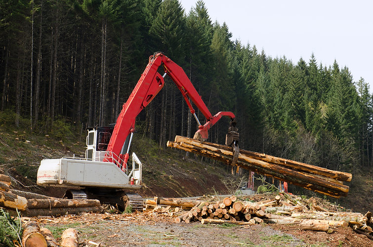Excavator moving logs in forest