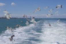 motonave ghibli cesenatico gite in mare