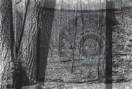Tapestry in the Woods