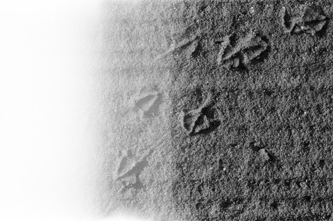 Footprints to Nowhere