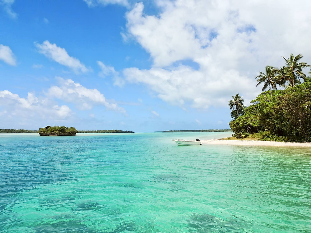 A beach in Jamaica with mangroves and a small beach with a white boat moared to the shore.  A blue sky and palm trees dot the landscape.