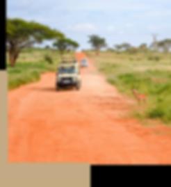 african-safari.png