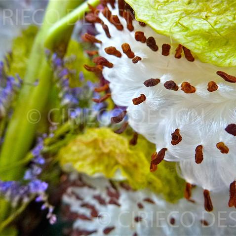 Seed Pod © Lisa Cirieco-Ohlman 2012