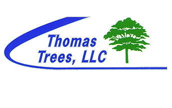 ThomasTrees.jpg