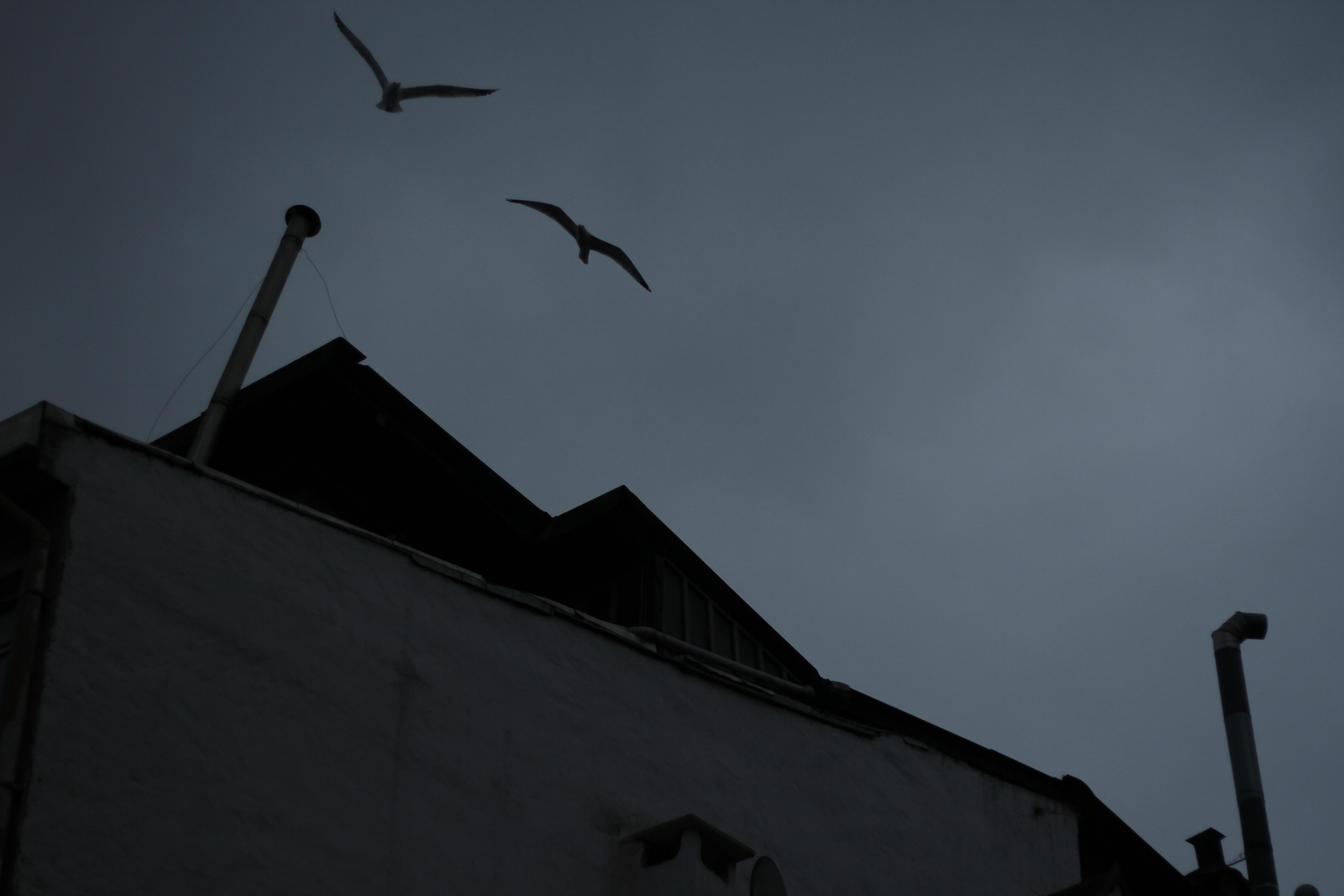 rooftop ii