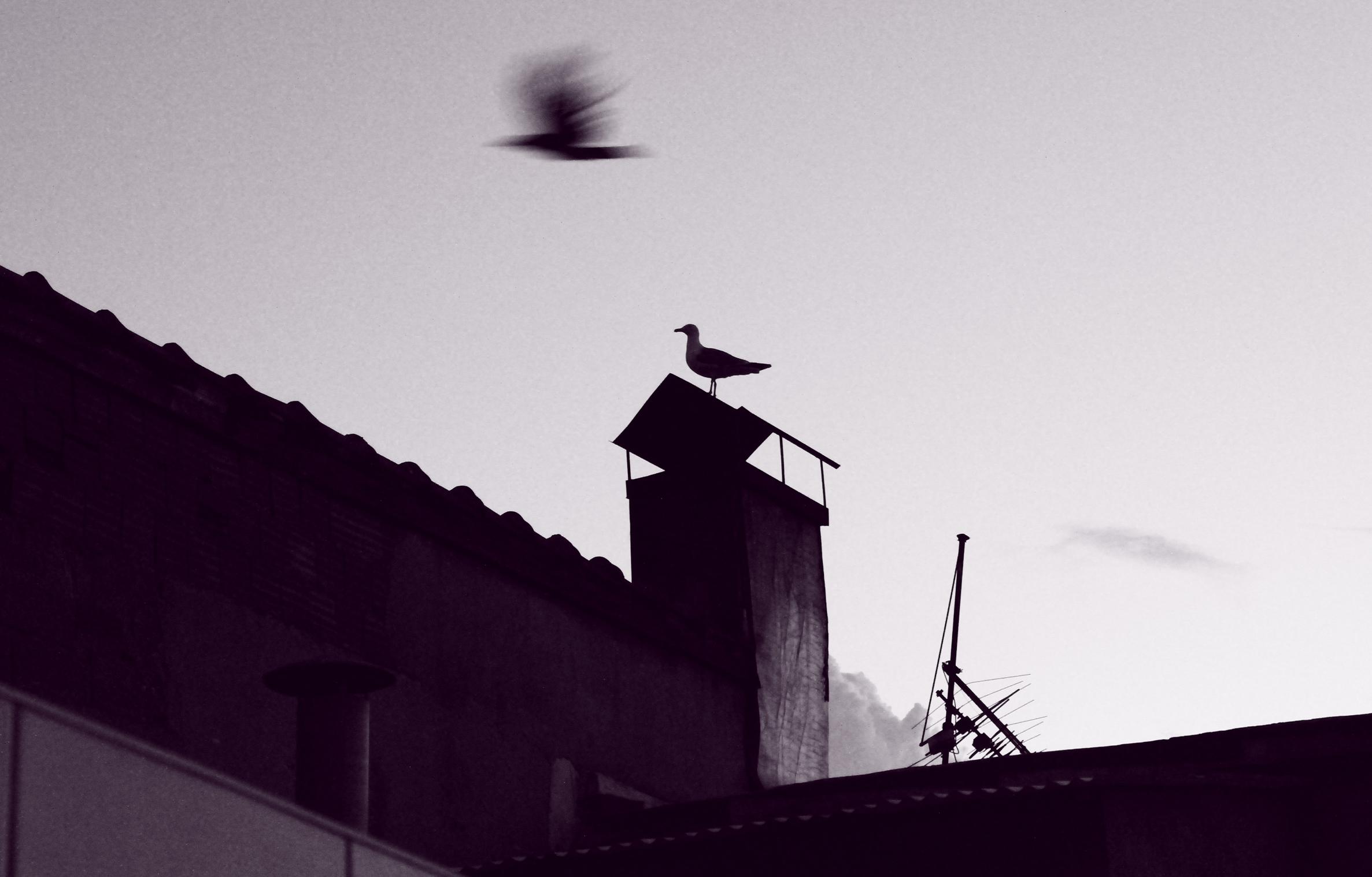 rooftop iii